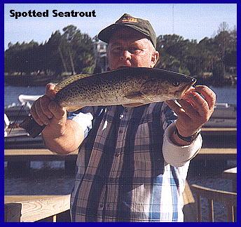 Trout fishing in steinhatchee florida for Steinhatchee fl fishing