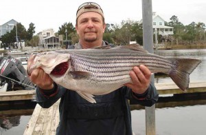 And finally, the catch of the year in my opinion is this 12 pound striped bass caught by Bobby Taylor using a pinfish in the river.