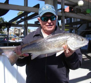 Bill Rees found this fine redfish in a creek near the river