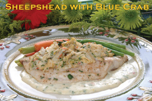 Sheepshead with Blue