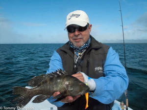We also found large numbers of black sea bass in 8 feet of water.