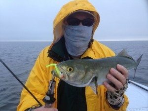 Capt. Tommy Thompson with a nice bluefish
