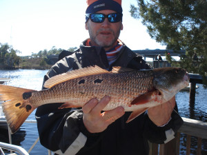 "This was the winning redfish in the ""Lots of Spots"" tournament, part of the Fiddler Crab Festival, caught by Kim Coffey."