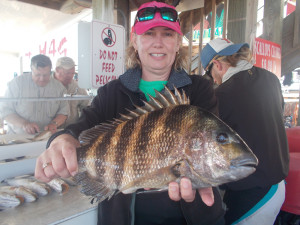Another beautiful sheepshead caught by Liz Reed.