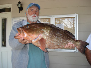 Judge Dave Reiman landed this fine red grouper during the Steinhatchee Community Tournament.