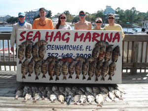 The Dykes family from Keystone Heights fished with Sea Hag fiddler crabs to bring home these fine  limits of sheepshead.