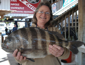 Janice Benton, from Gainesville, landed this giant sheepshead fishing with Wiley and Doris Horton.
