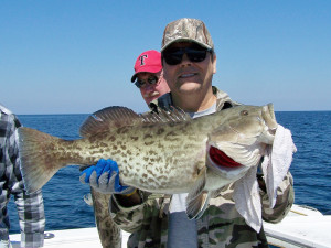 Dale Holston found this beautiful gag grouper which was promptly released…..but this month they are in season in our northern Big Bend state waters.