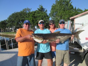 Phil Bannon, Brian Stone, Heath Day and Lynn Stone from Adel, Ga. caught this excellent 61 pound cobia on a jig after the fish ignored multiple live pinfish.