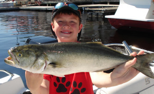 Dalton Rogers from Griffin, Ga. found this giant bluefish while fishing with his family.