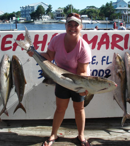 Another great cobia caught by Heather Montgomery on an offshore charter trip.