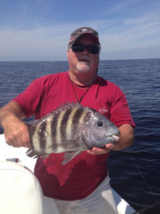 Ray Mitchell with a fine sheepshead caught at Steinhatchee Reef.