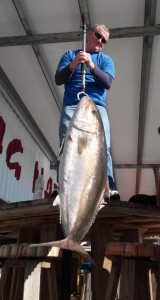 This 78 pound amberjack made an appearance at the cleaning table this month.