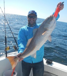 Michael Potapaw III ran into this bull red while grouper fishing.