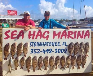 Russell Edwards fished with Mike Duttenhaver and found these hungry sheepshead.